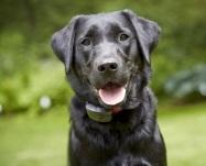 Happy Lap - DogWatch Usynligt Hegn