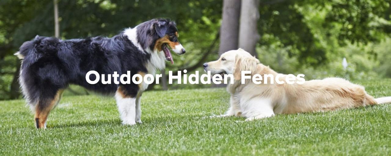 Frihed og sikkerhed til dig og din hund